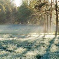 Морозное утро :: Юрий Цыплятников