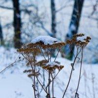 Ранняя зима :: Светлана Игнатьева