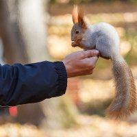 Любите ли вы орехи так, как люблю их я :: Дмитрий Кузнецов