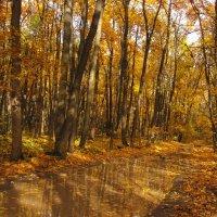В лесу. :: Лена Минакова