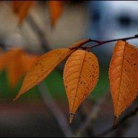 Пусть будет осень... :: Виолетта