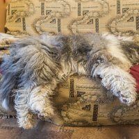 Мышка спит - она устала... :: Лариса Батурова