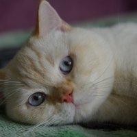 Эти глазки, эти голубые глазки... :: pich