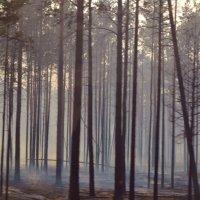 Таинства леса :: Александра Чурсина