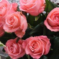 Цветы :: Дарья Бухарь