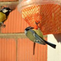 лечу на помощь! :: linnud