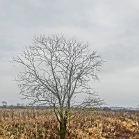 осень, уныние... :: Михаил Жуковский