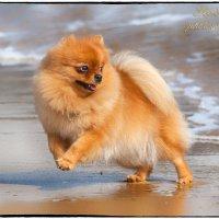 Атас! Волна идет! :: Leo Alex Photographer