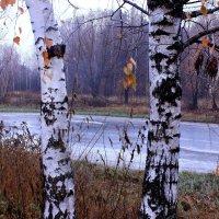 Дождливой ноябрьской порой :: Татьяна Ломтева