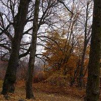 Ноябрьский парк :: Дмитрий Лебедихин