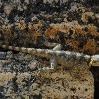 Тритон или геккон. :: Маргарита ( Марта ) Дрожжина