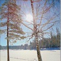 Сквозь солнце :: Лидия (naum.lidiya)