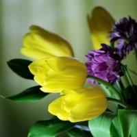 Тюльпаны :: Lesya Dorfman