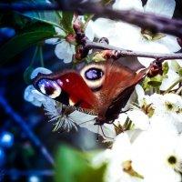 Бабочки - это духи умерших. :: Svetlanka S