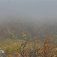 птица в тумане :: сергей пейкер