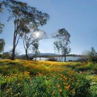 утро на озере Almaden :: viton