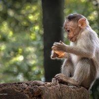 ...Вкуснотища - это человеческое печенье!!! :: Александр Вивчарик