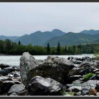 Каменный берег катуни :: Sergey Miroshnichenko