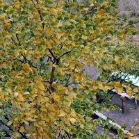 Осень из моего окна :: Светлана SvetNika17