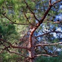Жизнь дерева :: Валерий Дворников