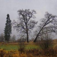 три  подруги... :: Ольга Cоломатина