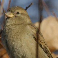 Даже не буду называть эту птицу!) :: Евгений Морозов