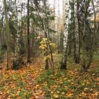 Осень-2012 - Img_6641 :: Андрей Лукьянов