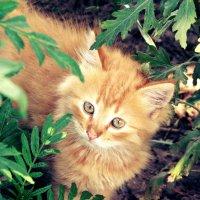 Рыжик-любопыт :: Анастасия