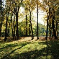 Осенние мотивы :: Инна Малявина