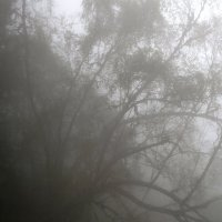 Туман :: Alex Sokolov