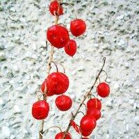 Плоды с цветочной клумбы . :: Мила Бовкун