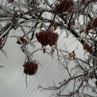 Хрустальная рябина :: Наталья Дмитриева
