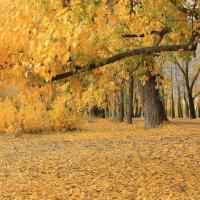 моя осень :: Наташа Шамаева
