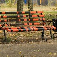 Веселая скамейка :: Наташа Шамаева