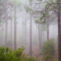 Туман, осенний туман... :: Илья Ткачев