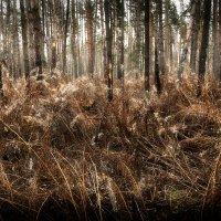 В джунглях ноябрьского леса... :: Андрей Войцехов