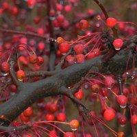 Чудо-деревце...... :: Ljudmila Korotkova