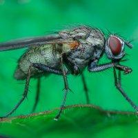 Просто муха :: Дмитрий Рутковский
