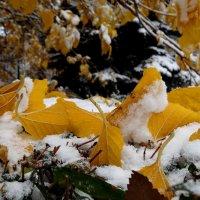 Что шорох листьев нам приносит?...... :: LORRA ***