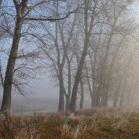 Утро туманное, утро седое..... :: Svetlana Kravchenko