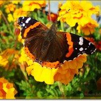 Гармония красок :: Лидия (naum.lidiya)