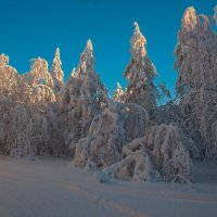 Снежные кружева :: vladimir