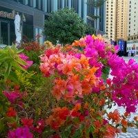 Цветы Дубая. :: Ирина