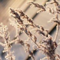 Зима :: Татьяна Трухалева