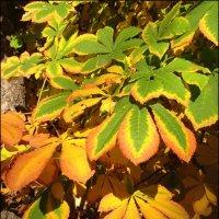 Яркие краски осени. :: Anna Gornostayeva