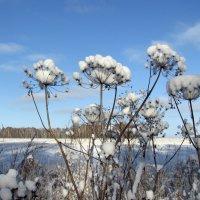 Зимние цветы :: Татьяна Ким