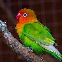 Попугай :: Диана Матисоне