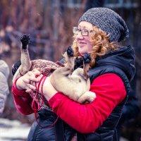 Вот оно собачье счастье :: Оксана Харламова