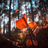 Осенний лист :: Elen Levi