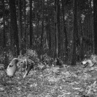 Охота... :: олег